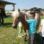 """Příměstský tábor """"Léto s koňmi"""" – I. termín"""