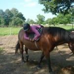 """Příměstký tábor """"Léto s koňmi"""" – II. termín"""
