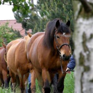 """Příměstký tábor """"Léto s koňmi"""" - II. termín"""