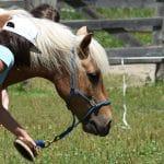 Léto s koňmi - termín: 20. 07. - 24. 07. 2020