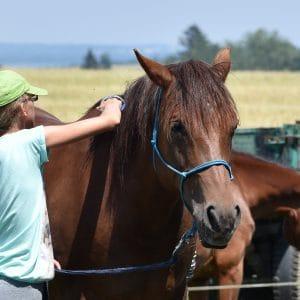 Léto s koňmi - termín: 13. 07. - 17. 07. 2020