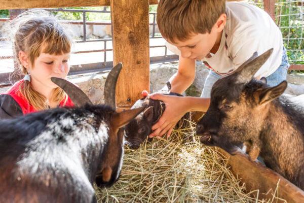 Děti a zvířata ze statku