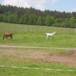 Naši koně na louce